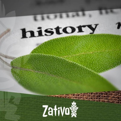 The History Of Salvia