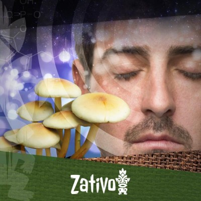 What Are Psilocybin and Psilocin?