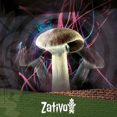 Zativo - Tips For A Better Magic Mushroom Experience