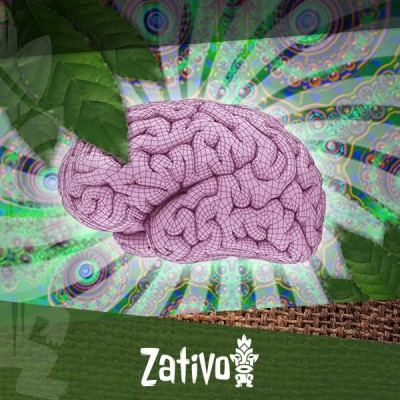 How Does Ayahuasca Affect Your Brain?