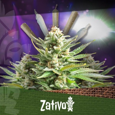 Top 10 Most Popular Cannabis Strains