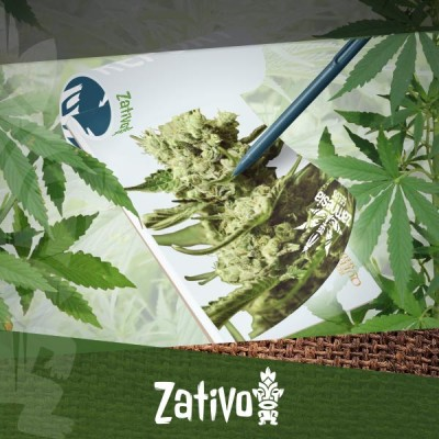 Grow Report: Growing New-School Zamnesia And Royal Queen Seeds Cannabis Strains