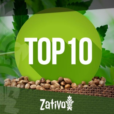 Top 10 Cannabis Seedbanks
