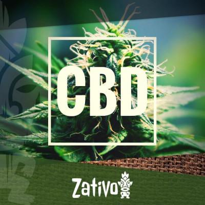 The Best High-CBD Cannabis Strains