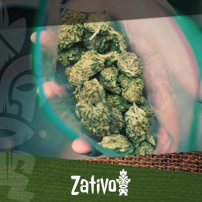 Create Superior Weed With A Male Cannabis Plant