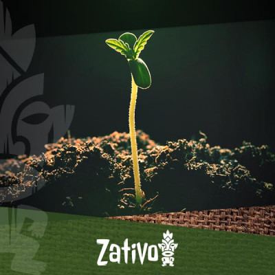 Understanding Soil Porosity for Cannabis Growing