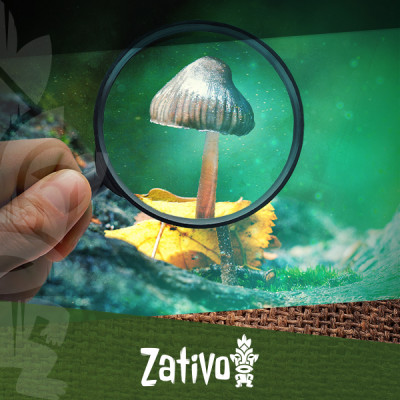 The Simple Guide To Identifying Common Magic Mushrooms