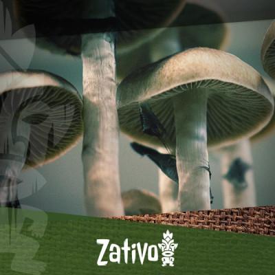 How To Use Magic Mushrooms or Truffles
